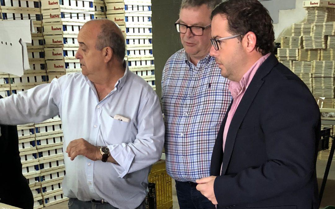 Almodóbar destaca el ahorro para el sector agrícola y ganadero alicantino gracias a las rebajas fiscales del Gobierno