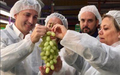 El PP apoya mejoras fiscales a los productores de DO Uva del Vinalopó