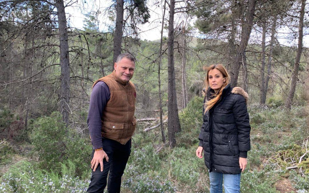 """El PP denuncia que los montes en la Foia de Castalla """"son un polvorín"""""""